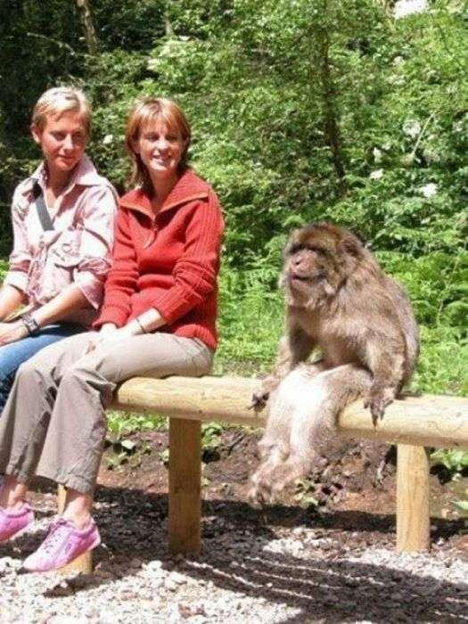 Найсмішніші знімки тварин за 2012 рік (52 фото)
