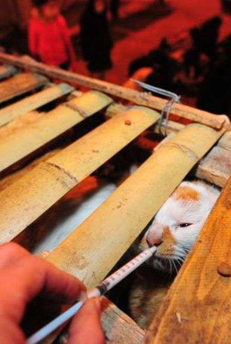 Аварія вантажівки врятувала майже тисячу котів (16 фото)