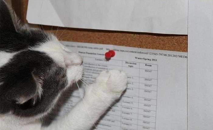 Докази злочину суворого коте (5 фото)