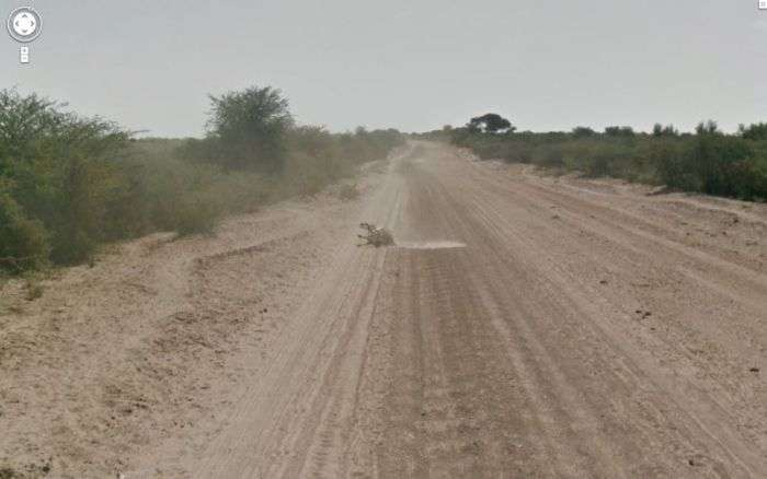 Гугломобіль проти ослика (11 фото)