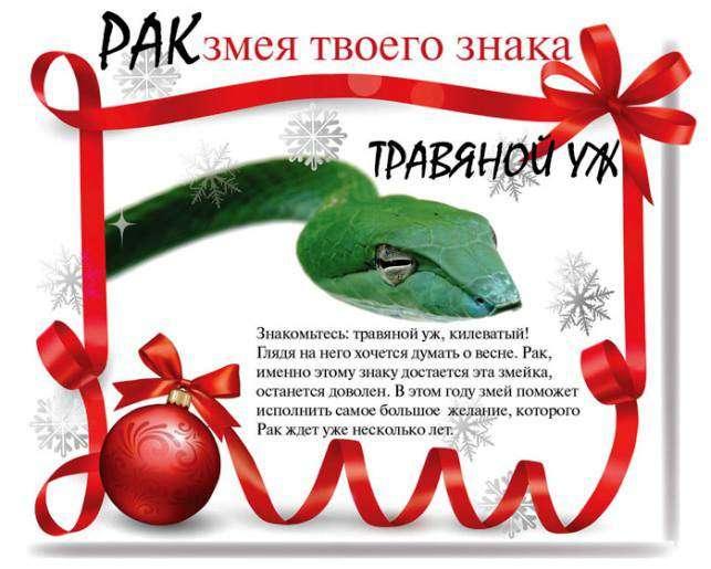 Який змією будеш ти в 2013 році (13 фото)
