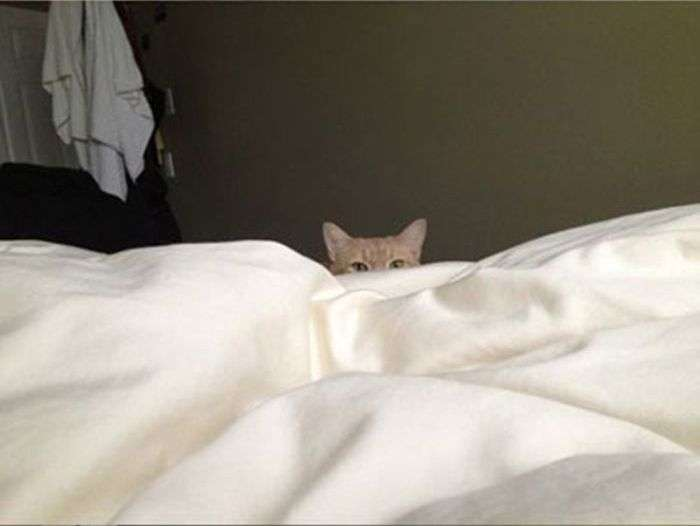 Як прокидатися без будильника вранці (4 фото)