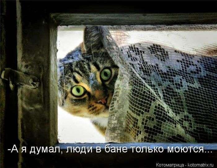 Кращі котоматриці тижні (50 фото)