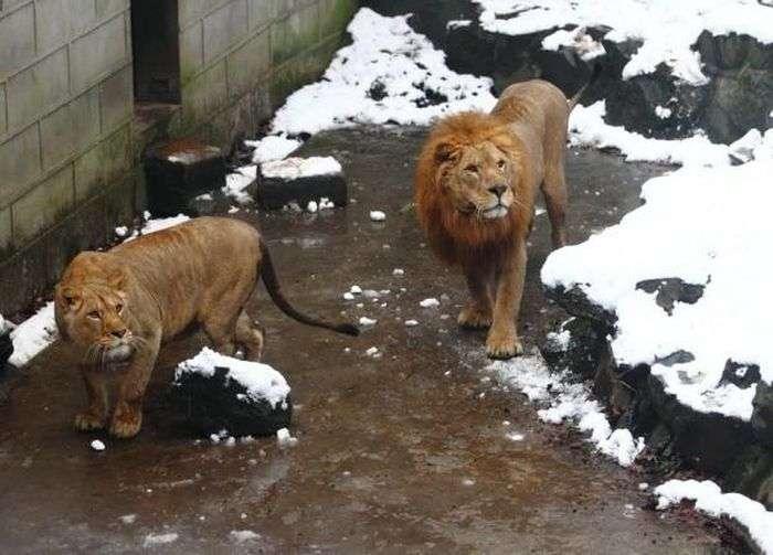 Нова забава у китайському зоопарку (6 фото)