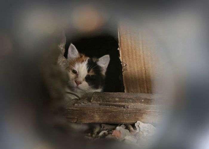 Комунальна служба Мінська ховає котів живцем (8 фото)