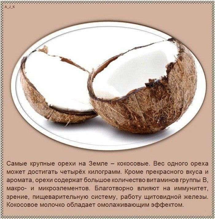 Цікаві факти про різні види горіхів (10 фото)