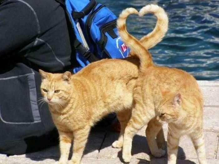 Знімки домашніх котів, зроблені в потрібний момент (25 фото)