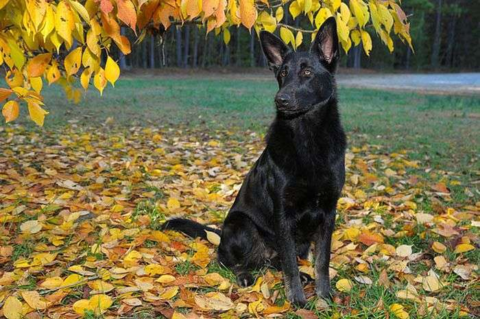 Собача інтуїція або як собака іншу собаку врятувала (10 фото)