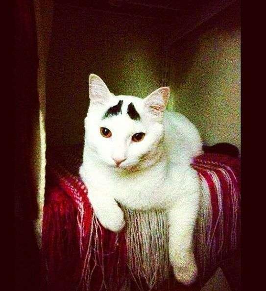 Незвичайний кіт, якого прозвали Бровастиком (30 фото)