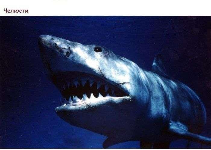 Найвідоміші картини Стівена Спілберга (25 фото)
