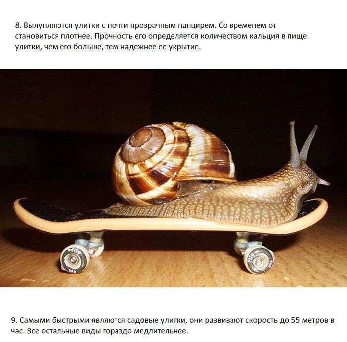 Цікаві факти про равликів (7 фото)