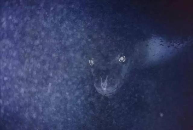Странные и пугающие снимки с просторов сети Всячина