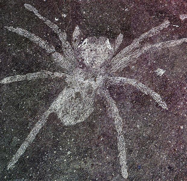 Останки древних пауков со светящимися глазами найдены в Южной Корее Природа