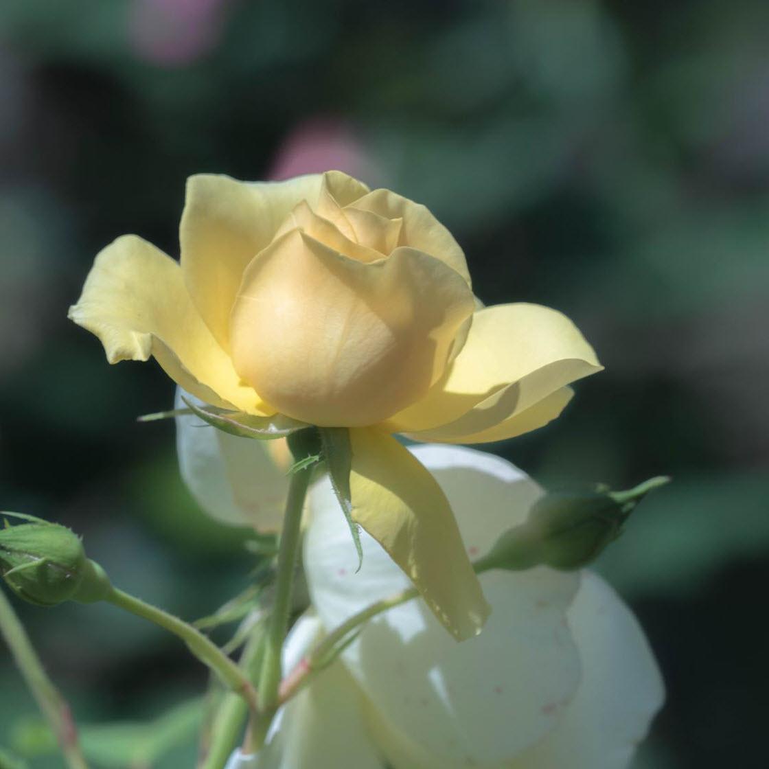 Красивые цветы на снимках Хисаши Сугам природа