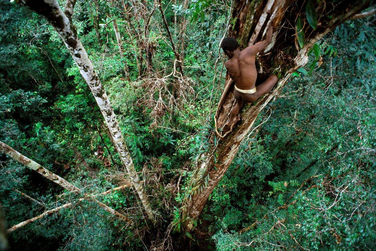 Короваи, живущие на деревьях обычаи разных народов мира