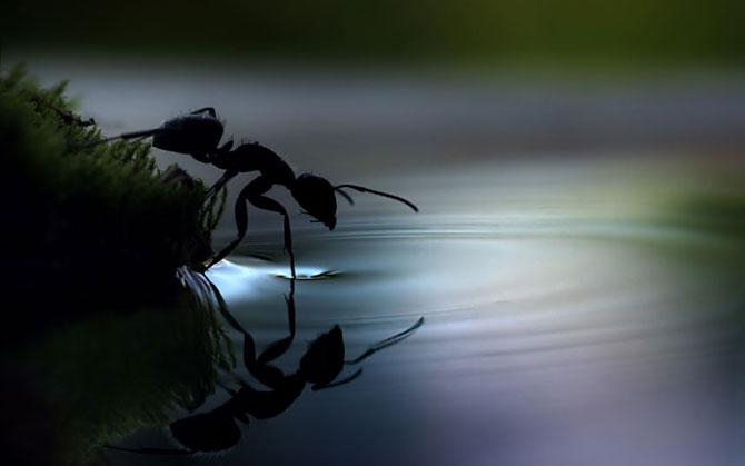 Макрофотографии улиток и насекомых