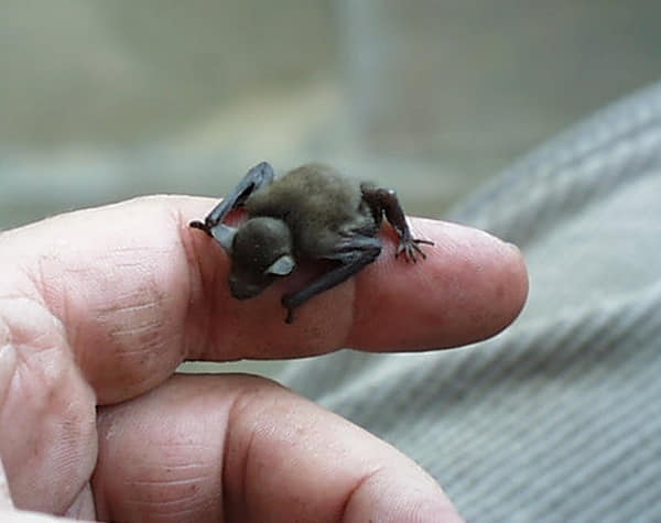 Самые маленькие животные мира — меньше вашего пальца! картинки