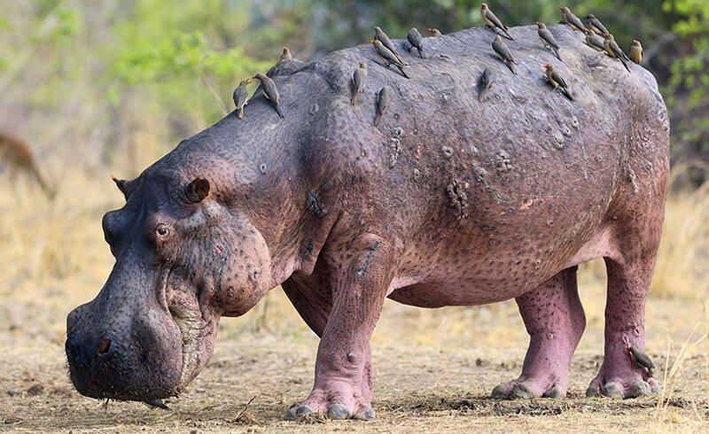 Чудище непобедимое животные
