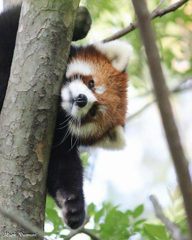 5 животных родом из другой эры, которые дожили до нашей животные
