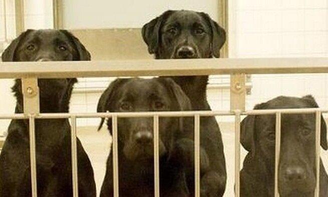 Позволят ли шведским ученым убивать собак ради науки?