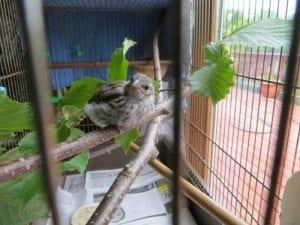 Птенец выпал из гнезда и был обречен, но его нашел ветеринар. Повезло птичке! истории из жизни