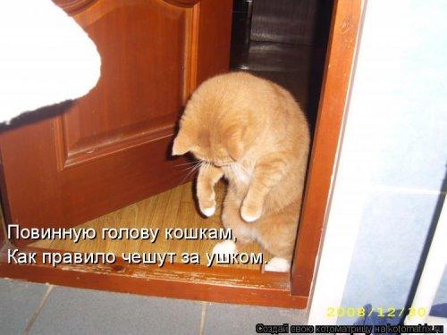 Лучшая котоматрица недели