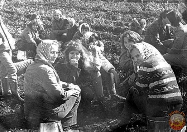 СССР: романтика поездок «на картошку» Дальние дали